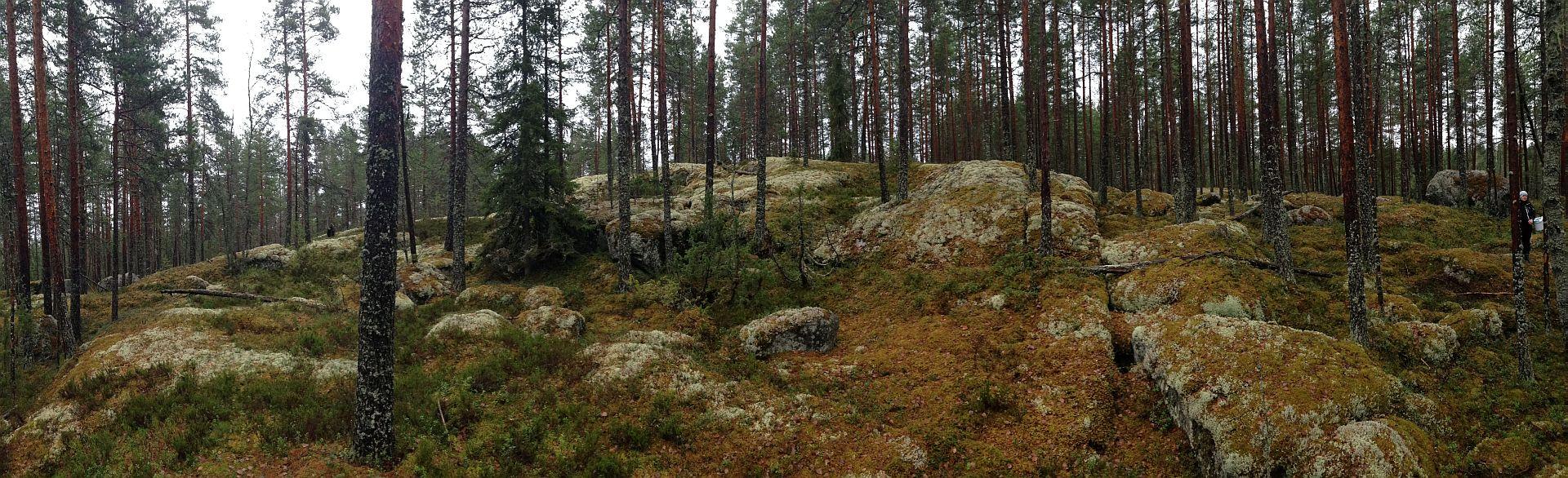 20131127_mannikko
